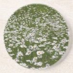 Field of Daisies Nature Photo Sandstone Coaster