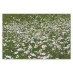 Field of Daisies Nature Photo Tissue Paper