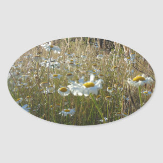 Field of Daisies Oval Sticker