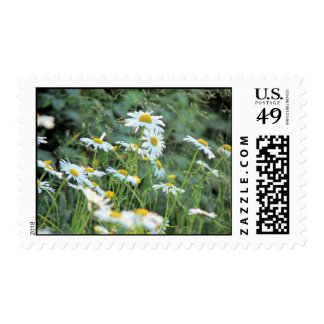 Field of Daisies Postage