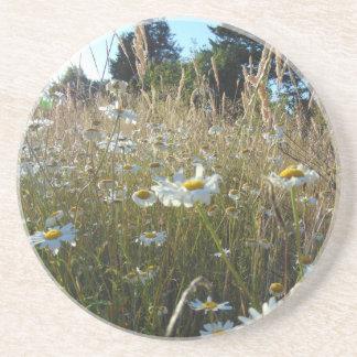 Field of Daisies Sandstone Coaster