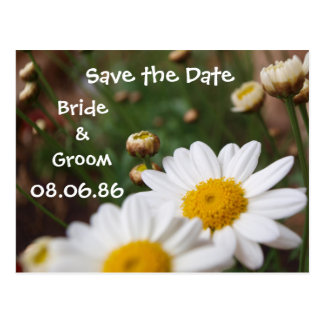 Field of Daisies Save the Date Postcards