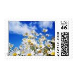 Field Of Daisies Stamps