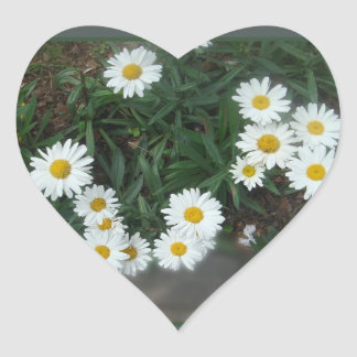 Field of Daisies Stickers