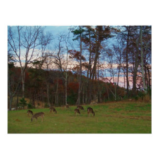 Field of Deer & a Pink SunSet Poster