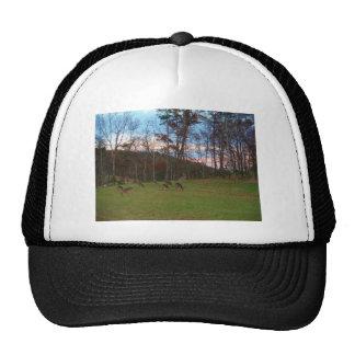 Field of Deer & a Pink SunSet Trucker Hat