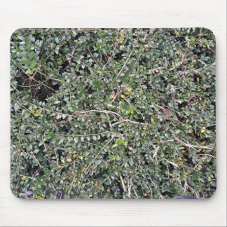 Field of Dry Cut Grass Mouse Pad
