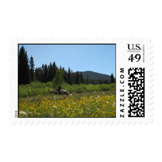 Field of Flowers Postage Stamps