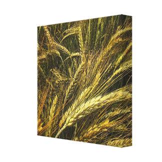 Field of Grain Canvas Print