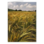 Field of Grain Greeting Card