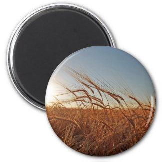 Field of Grain Magnet