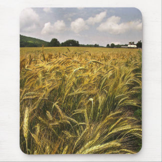 Field of Grain Mouse Pad