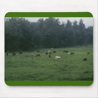 field of horses mouse pad