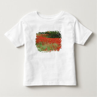 Field of hybrid poppy flowers planted along toddler t-shirt