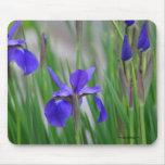 Field of Irises. Mousepad