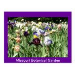 Field of Irises Postcard