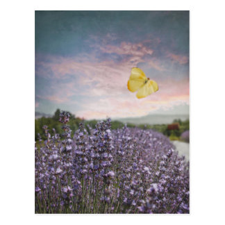 Field of Lavender Flowers, Blue Sky, Pink Sunset, Postcard