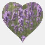 Field of Lavender Sticker