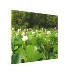 Field of Lotus Flowers Canvas Print