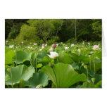 Field of Lotus Flowers Card