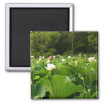 Field of Lotus Flowers Magnet