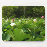 Field of Lotus Flowers Mouse Pad