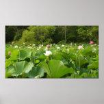 Field of Lotus Flowers Poster