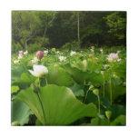 Field of Lotus Flowers Tile