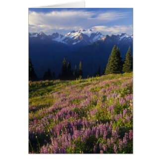 Field of lupine, Mt. Olympus, and clouds at Greeting Card