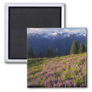 Field of lupine, Mt. Olympus, and clouds at Refrigerator Magnets