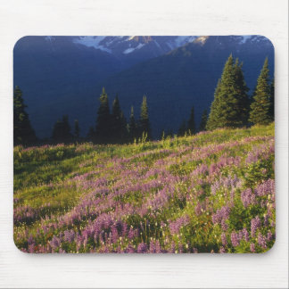 Field of lupine, Mt. Olympus, and clouds at Mouse Pad