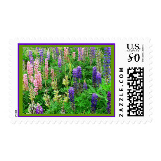 Field of Lupins Postage