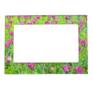 FIELD OF MAUVE COLORED TULIPS (PHOTOG) MAGNETIC FRAMES