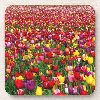 Field of multicolored tulips beverage coaster