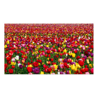 Field of multicolored tulips business card