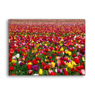 Field of multicolored tulips envelope