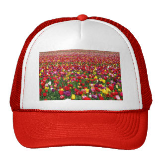 Field of multicolored tulips hats