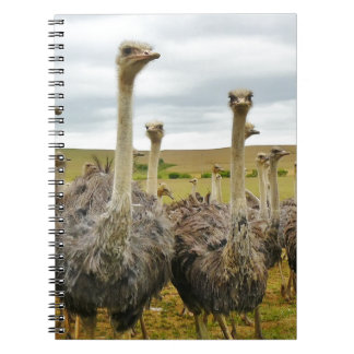 Field of Ostriches Notebook