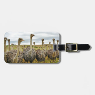 Field of Ostriches Tag For Luggage
