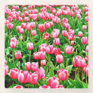 Field of Pink Tulips Glass Coaster