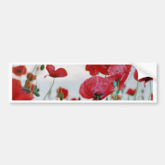 Field of Poppies Against Grey Sky Bumper Stickers