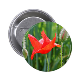 field of poppies button