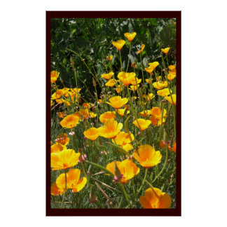 Field of Poppies Large Posters  and Prints