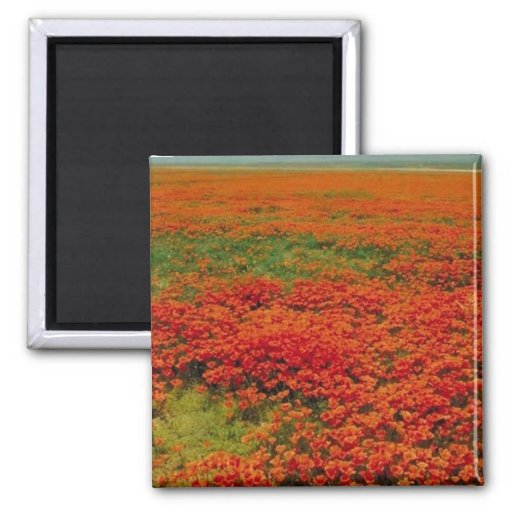 Field of Poppies Magnets