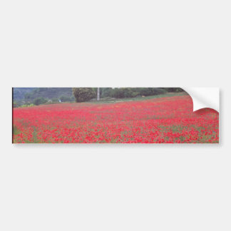 Field of poppies near Gap flowers Bumper Sticker