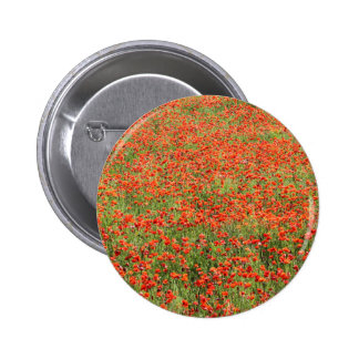 field of poppies pinback button