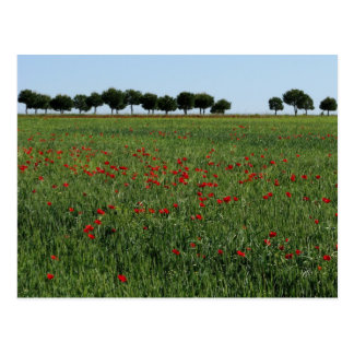 Field of Poppies Postcard