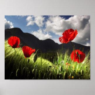 Field of POPPY FLOWERS Poster