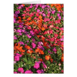 Field of purple pink orange impatients flowers greeting card