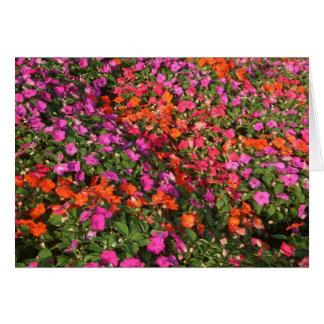 Field of purple pink orange impatients flowers greeting cards
